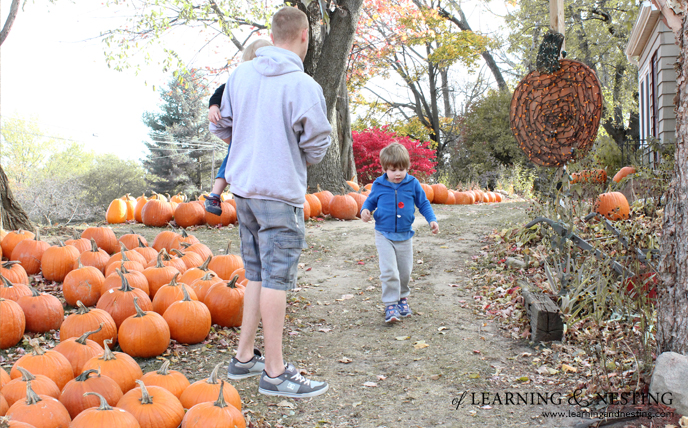13 Things to do this Fall: A Seasonal Bucket List - Visit a Pumpkin Patch